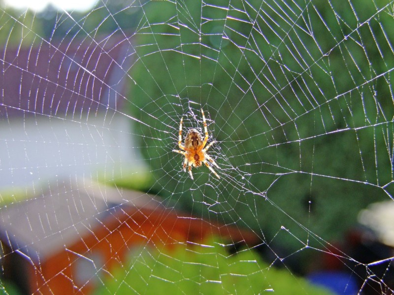 spider-113208_1920-c-pixabay-cc-laborratte